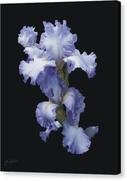 Blue Bearded Iris Canvas Print