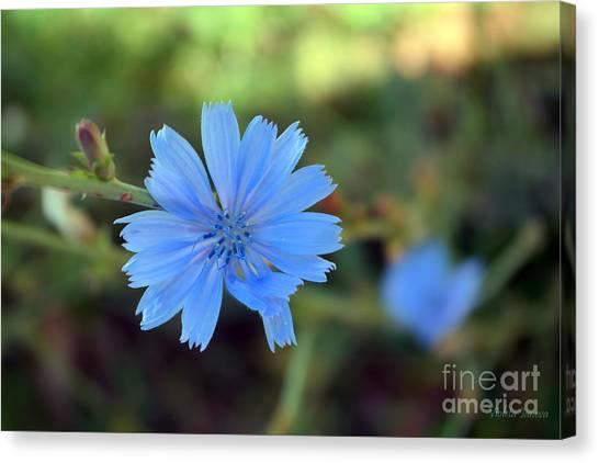 Violeta Canvas Print - Blue Beauty by Violeta Ianeva