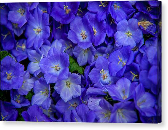 Blue Bells Carpet. Amsterdam Floral Market Canvas Print