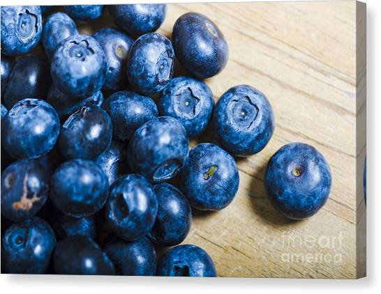 Wild Berries Canvas Print - Blue Berries  by Jorgo Photography - Wall Art Gallery