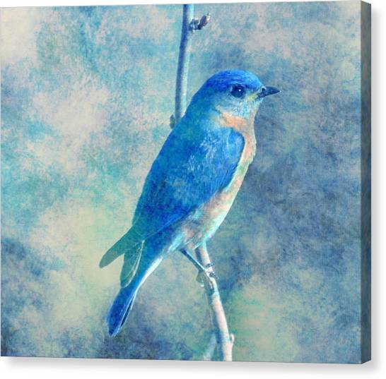 Blue Bird Blue Sky Canvas Print