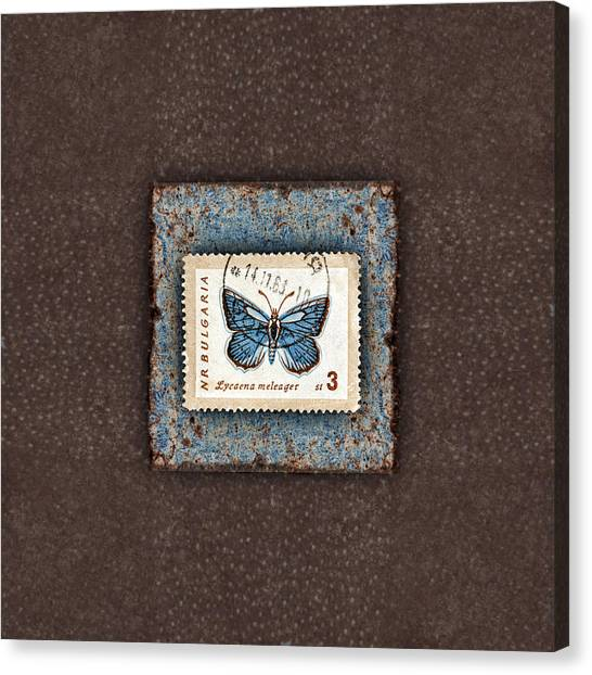 Blue Butterfly On Copper Canvas Print