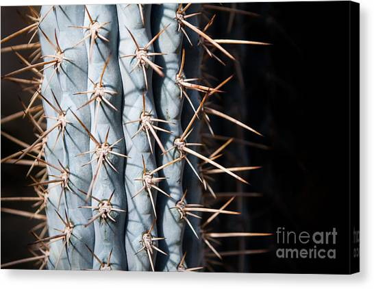 Blue Cactus Canvas Print