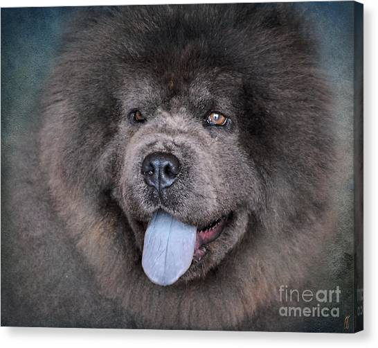 Blue Chow Chow Canvas Print