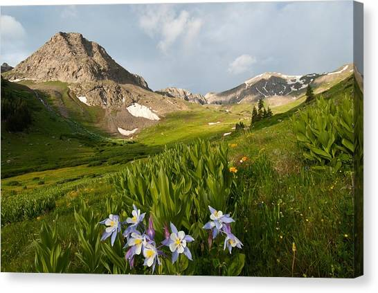 Handie's Peak And Blue Columbine On A Summer Morning Canvas Print