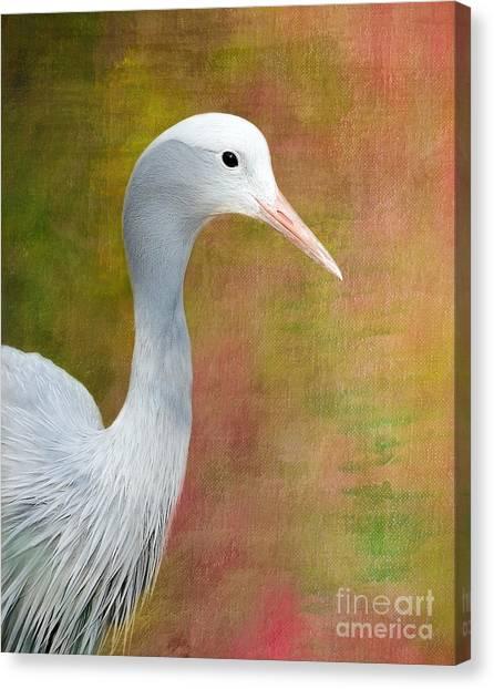 Blue Crane Canvas Print