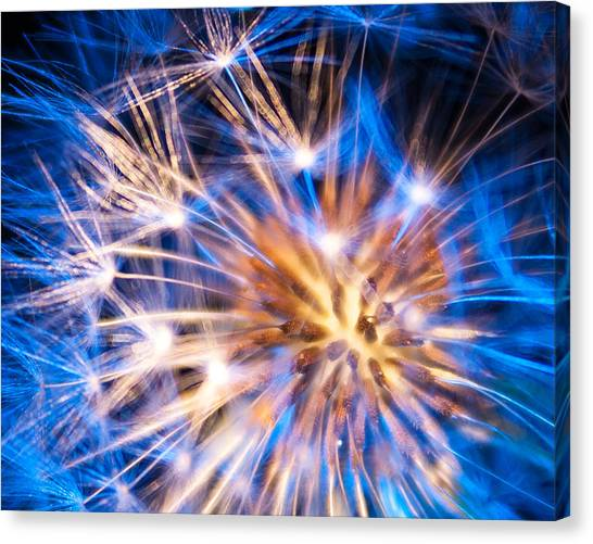 Blue Dandelion Up Close Canvas Print