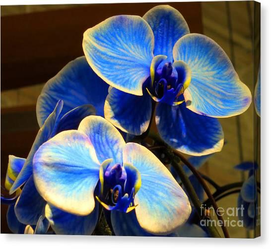 Blue Diamond Orchids Canvas Print by Patricia Januszkiewicz