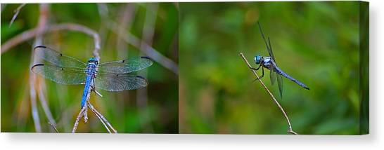 Blue Dragon Fly Wide Print Canvas Print