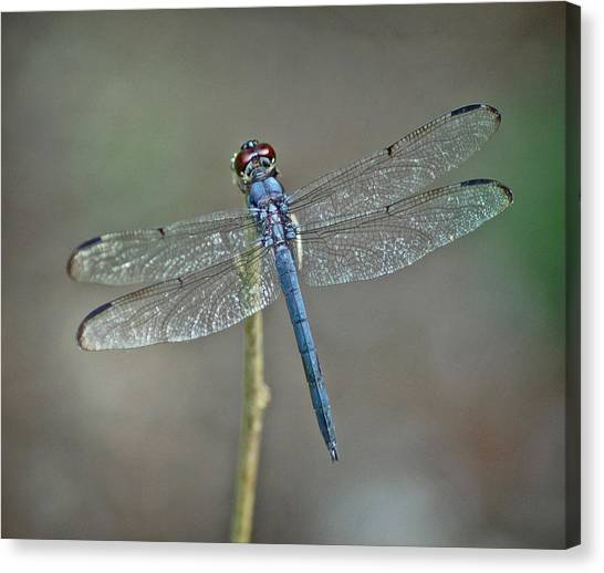 Blue Dragonfly II Canvas Print by Linda Brown