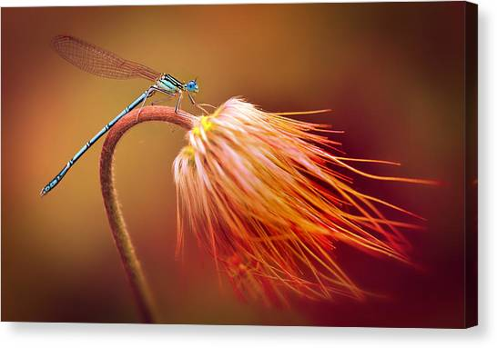 Blue Dragonfly On A Dry Flower Canvas Print