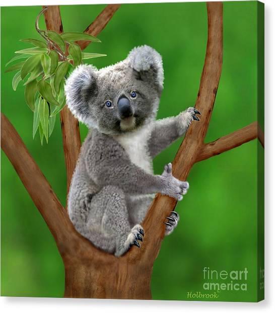 Blue-eyed Baby Koala Canvas Print