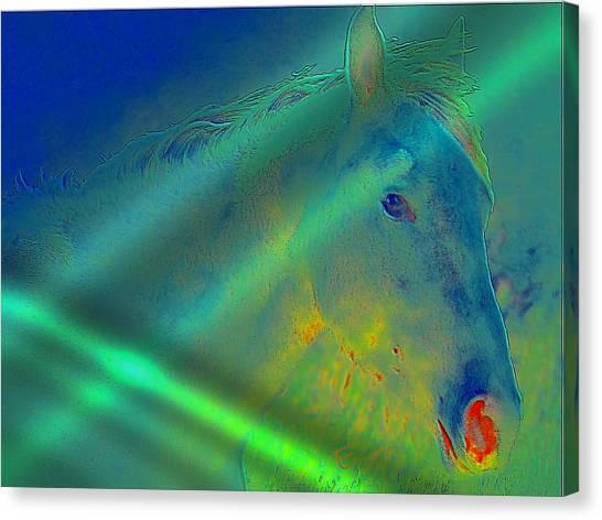 Blue Eyed Horse Canvas Print by Ernestine Manowarda