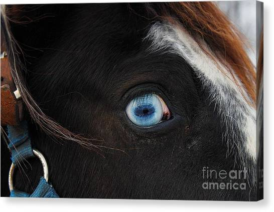 Blue Eyed Horse Canvas Print