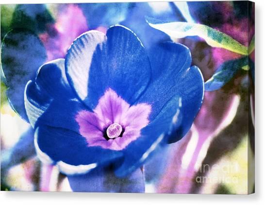 Blue Flower Canvas Print by Angela Bruno