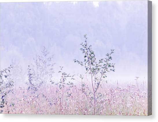 Blue Fog Canvas Print