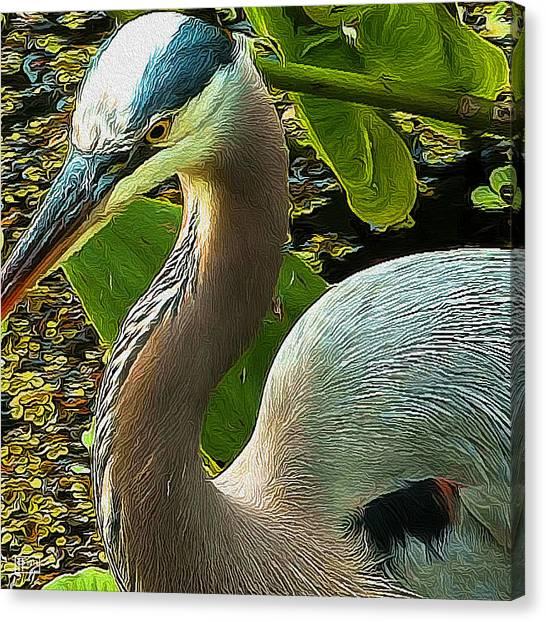 Blue Heron Addict Canvas Print