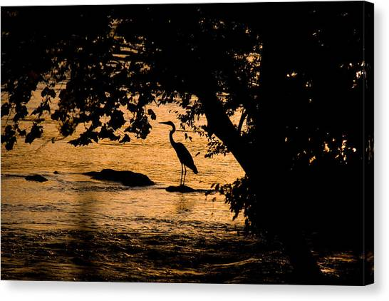 Blue Heron At Sunset Canvas Print