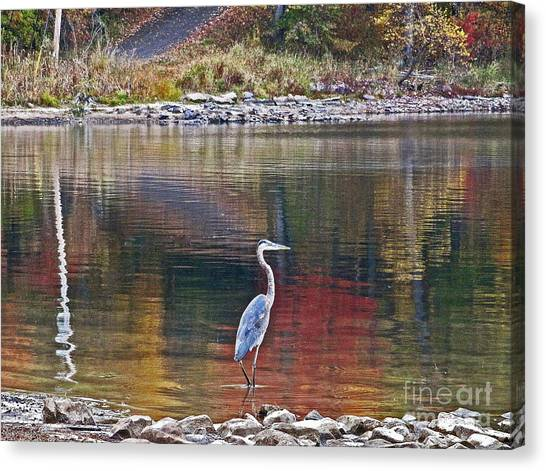 Blue Heron In Autumn Canvas Print