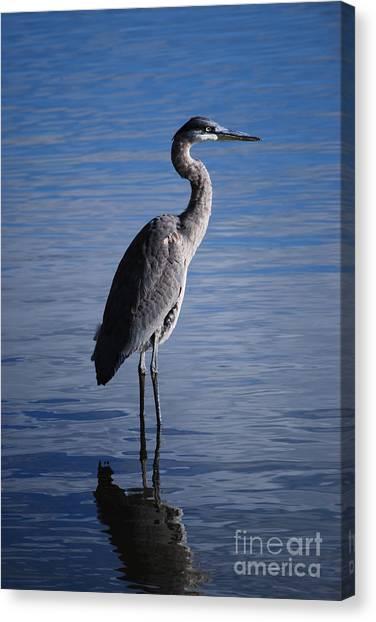 Blue Heron Canvas Print by Joy Bradley