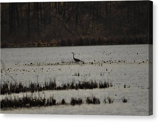 Blue Heron On Lake Canvas Print by Valarie Davis