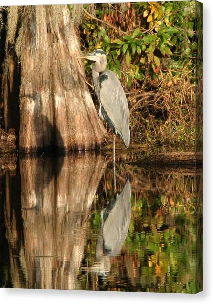Blue Heron Reflection Canvas Print by Jeff Wright