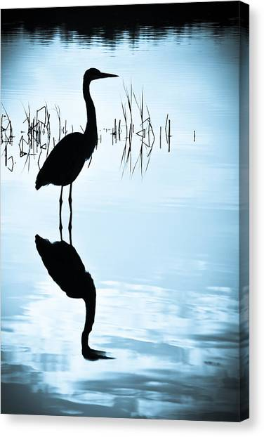 Blue Herons Canvas Print