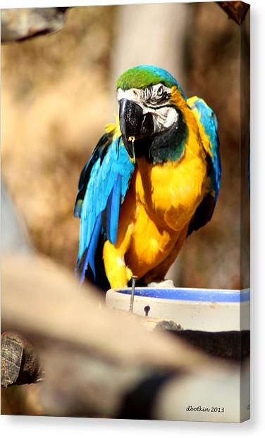 Blue Jacket Canvas Print by Dick Botkin