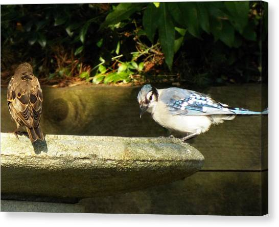 Blue Jay Hello Canvas Print by Lisa Roy