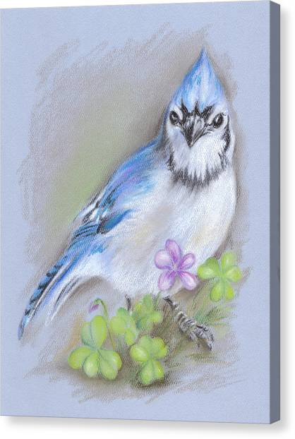 Blue Jay In Spring With Oxalis Canvas Print