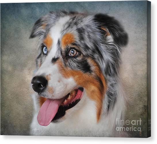 Blue Merle Australian Shepherd Canvas Print
