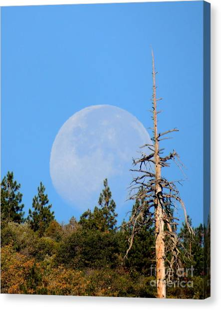 Brown Ranch Trail Canvas Print - Blue Moon by Vicki Buckler
