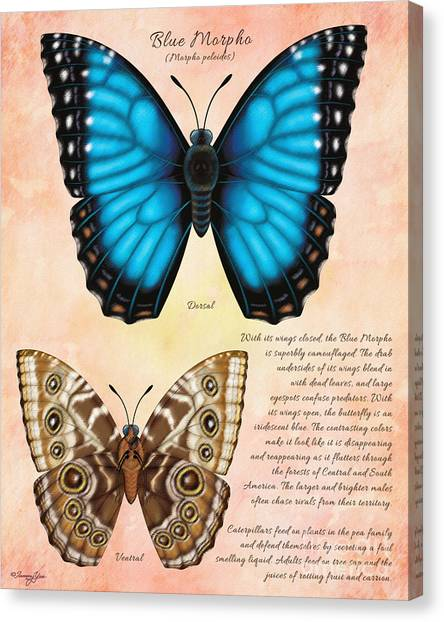 Blue Morpho Butterfly Canvas Print by Tammy Yee