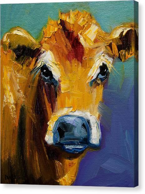 Blue Nose Cow Canvas Print