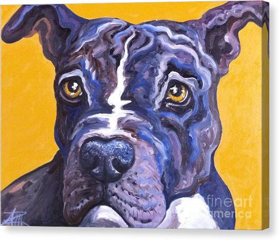 Blue Nose Pitbull Canvas Print