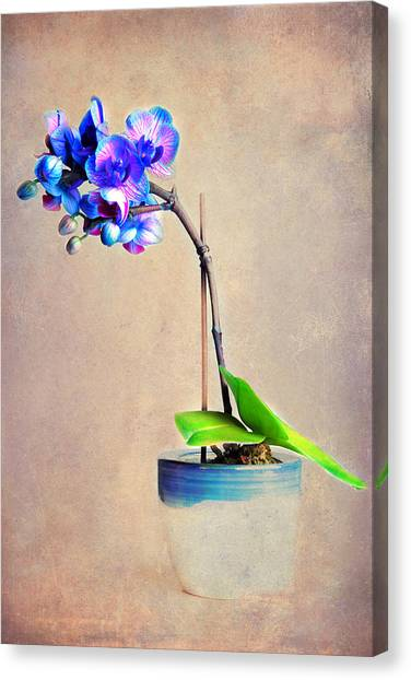 blue Orchid Canvas Print by Angela Bruno