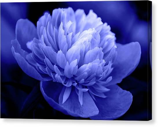 Blue Peony Canvas Print