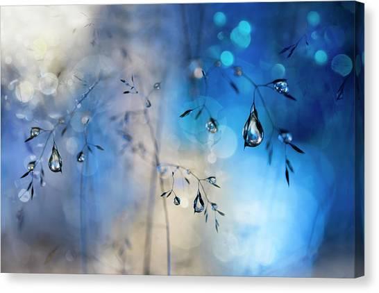 Drops Canvas Print - Blue Rain by Heidi Westum