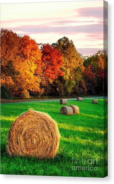 Groundhogs Canvas Print - Blue Ridge - Fall Colors Autumn Colorful Trees And Hay Bales I by Dan Carmichael