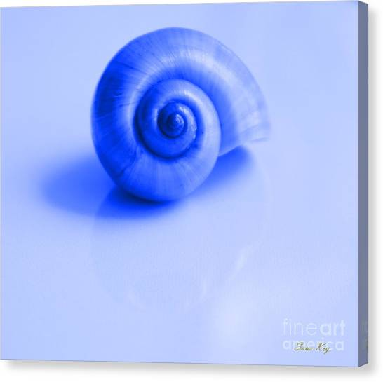 Blue Shell Canvas Print