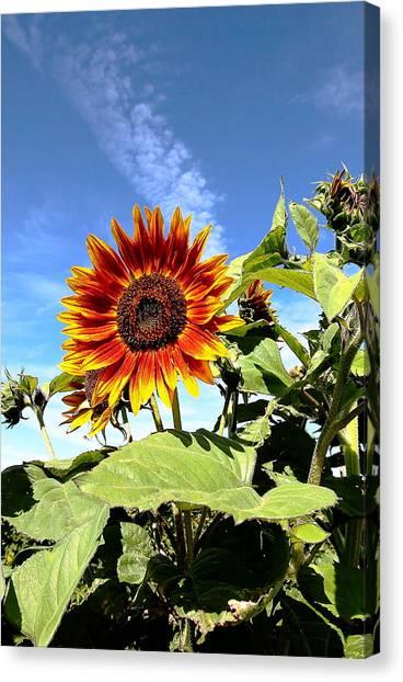 Blue Sky And Sun Flower Canvas Print