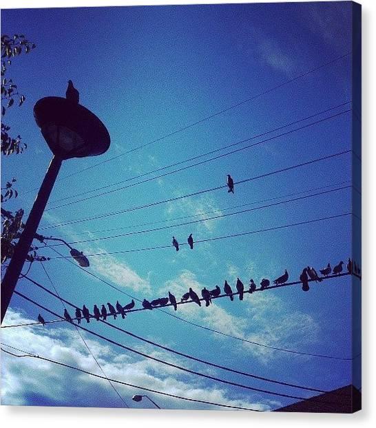 Sparrows Canvas Print - #blue #sky #up #bird #birds #sparrow by Amirah Farhah Zakaria