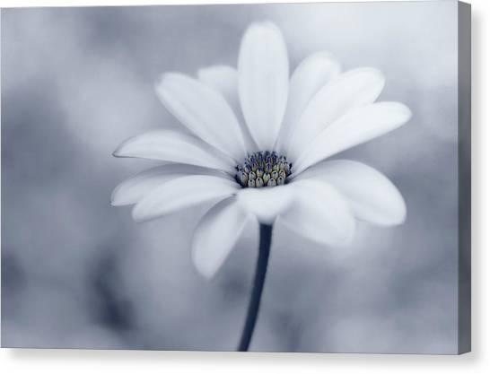 Tenderness Canvas Print - Blue Tones by Lotte Gr?nkj?r