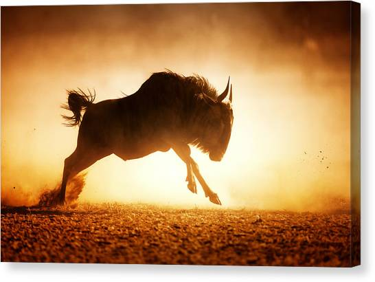 Side View Canvas Print - Blue Wildebeest Running In Dust by Johan Swanepoel