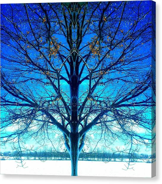 Blue Winter Tree Canvas Print