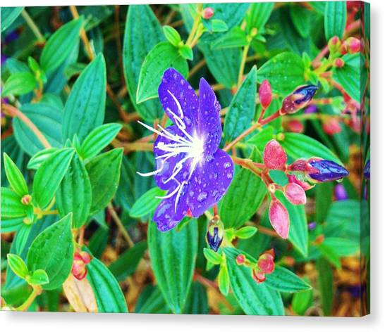 Blue With Dew Canvas Print by Van Ness