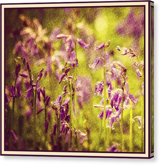Bluebell In The Woods Canvas Print