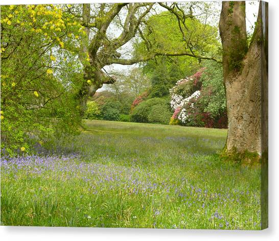 Bluebells And Rhododendrons Canvas Print by Rob Sherwood
