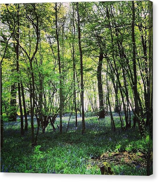 Forest Canvas Print - Bluebells In Pittswood  by Nic Squirrell