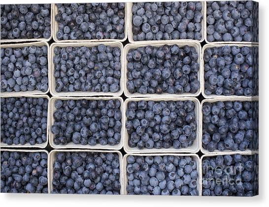 Blueberries Canvas Print - Blueberries by Tim Gainey